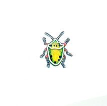 ナナホシキンカメムシ