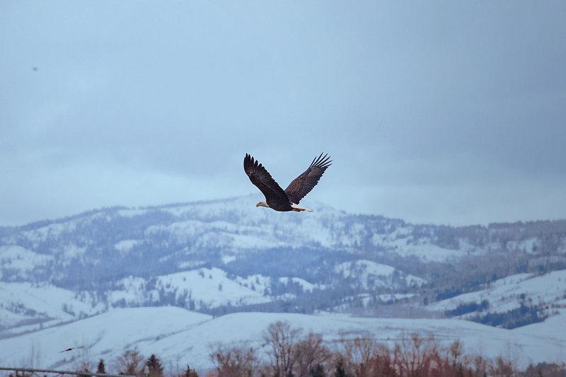 bald eagle split creek ranch_b.jpg
