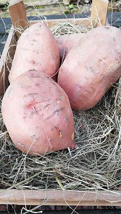 Sweet Potatoes Large