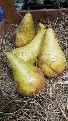 Conference Pears per kilo