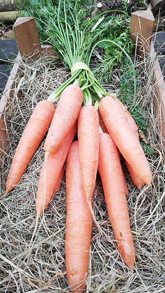 Carrots Bunch