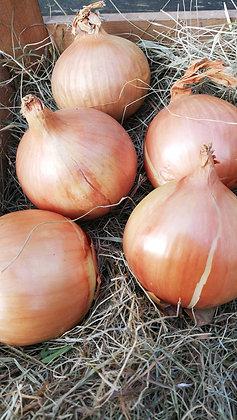 Onions White per 500g