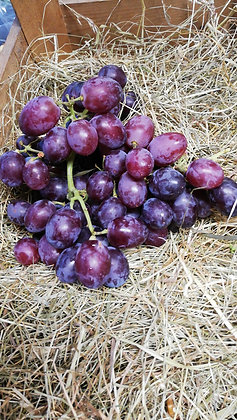 Grapes Red - per punnet