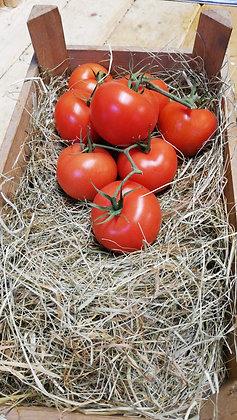 Tomatoes Round