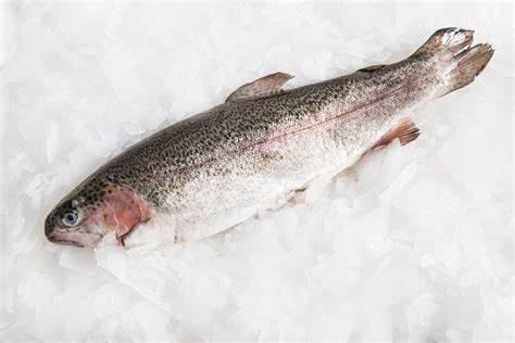Whole Rainbow Trout - £7.60 per kilo