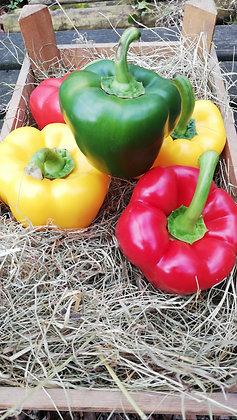 Pepper Bell, Green