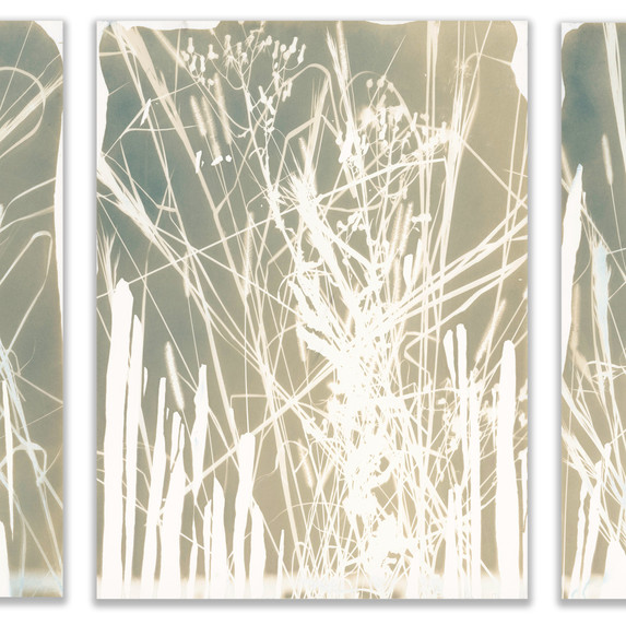Botanical Triptych