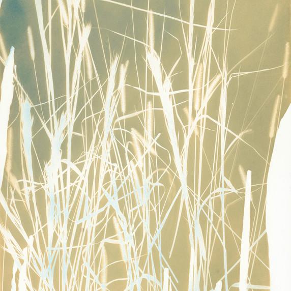 Botanical 15 (Gold)