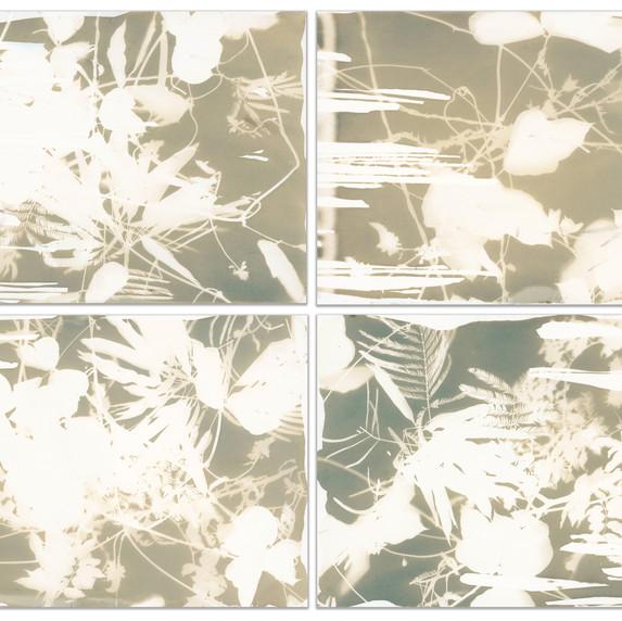 Botanical series of 4