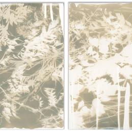 Botanical Diptych 1