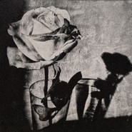 Shadow Rose.