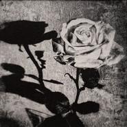 Shadow Rose II
