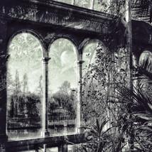 Window View- Palm House Sefton