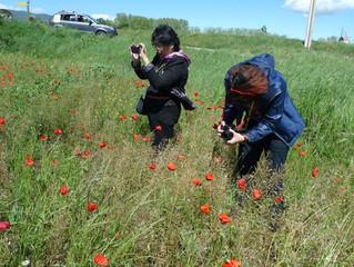Recording the Nature