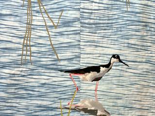 Wild Life: Wetlands