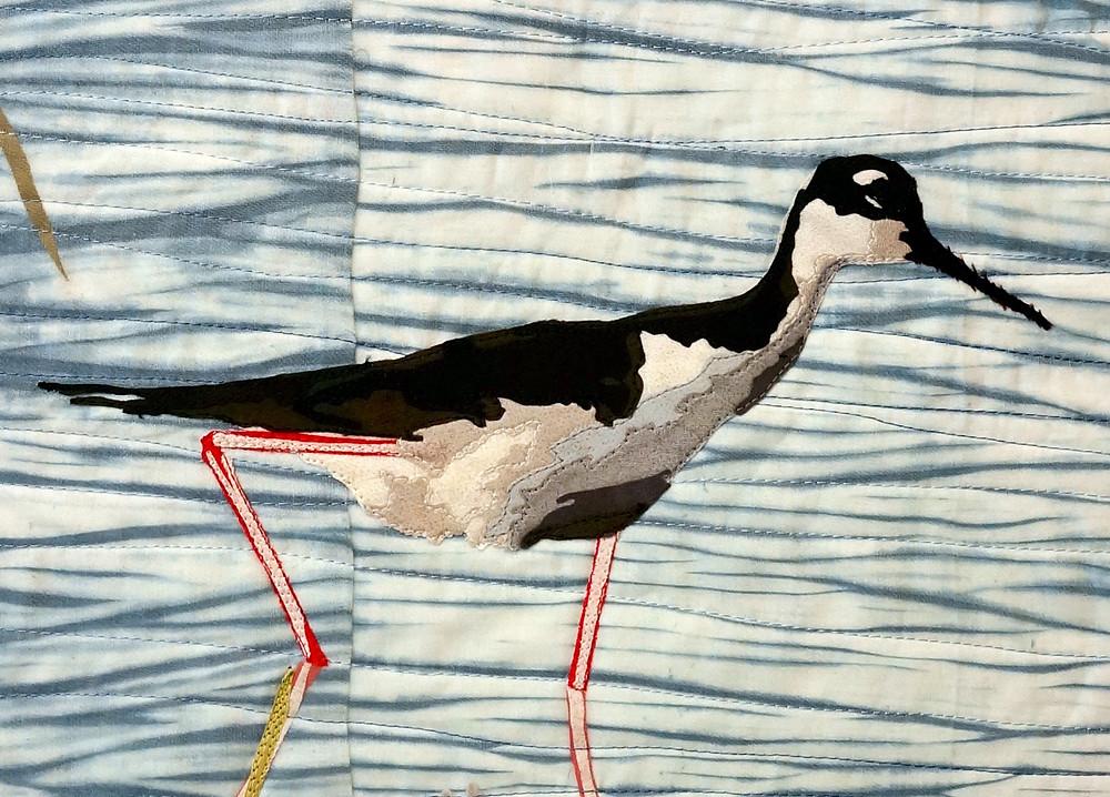Black-necked stilt, detail