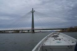 Sterlet Donau LIFE Kristof Reuther 3.jpeg