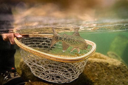 Ois die bewirtschafter angeln österreich