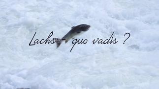 Lachs - quo vadis? | 2020