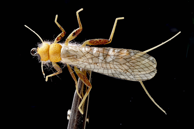 J:Son Stonefly Adult gelb