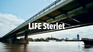 LIFE Sterlet | 2021