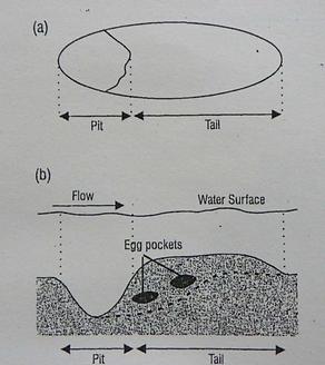 D. T. Crisp (2000) Trout and Salmon: Eco