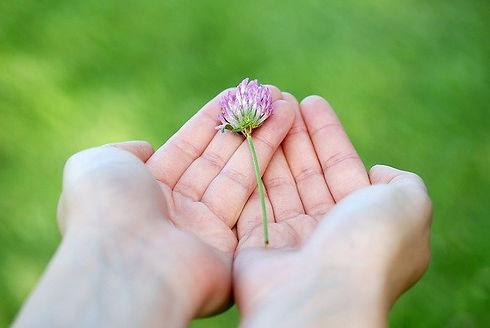 flower-8539_640.jpg