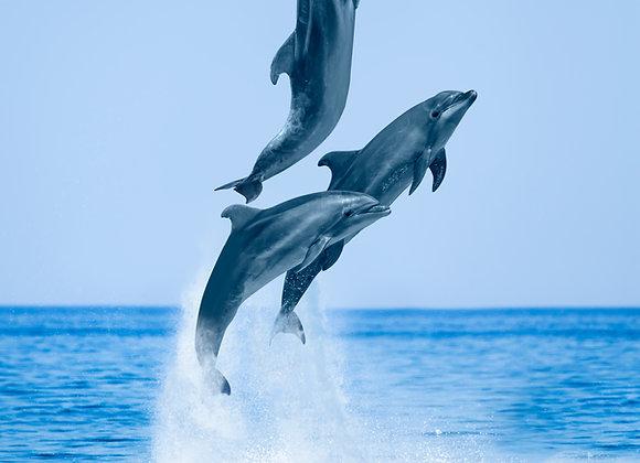 שלישית דולפינים