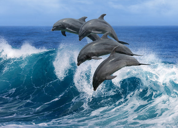 קבוצת דולפינים