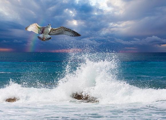 נוף ימי