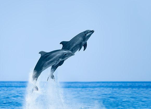 דולפינים בקפיצה