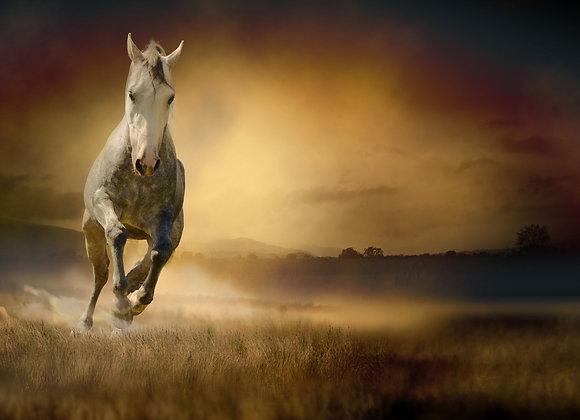 סוס דוהר בשקיעה