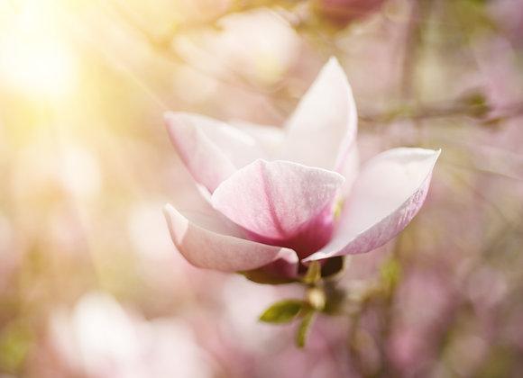 פרח ורד