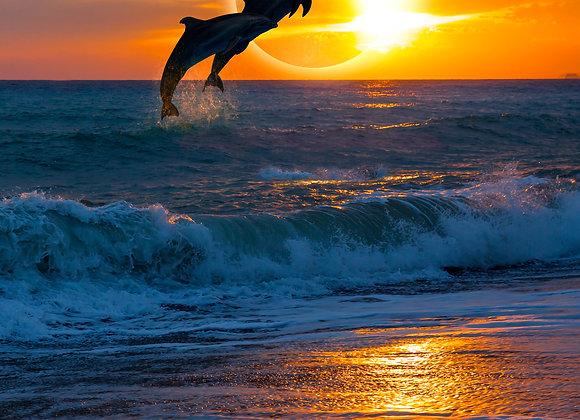 דולפינים בשקיעה