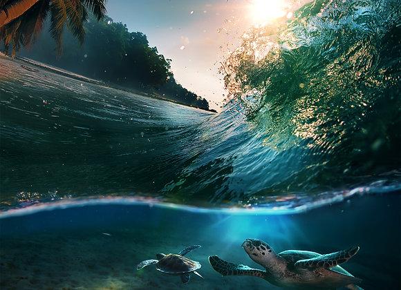 משטח האוקיינוס עם צבים