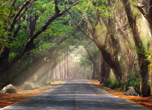 מסלול עצים