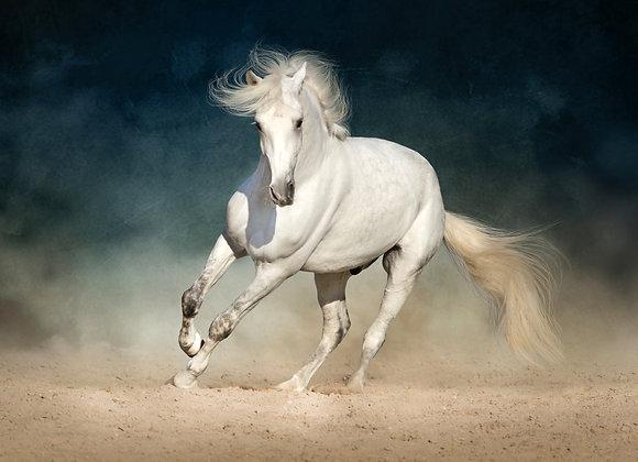 דהירת הסוס