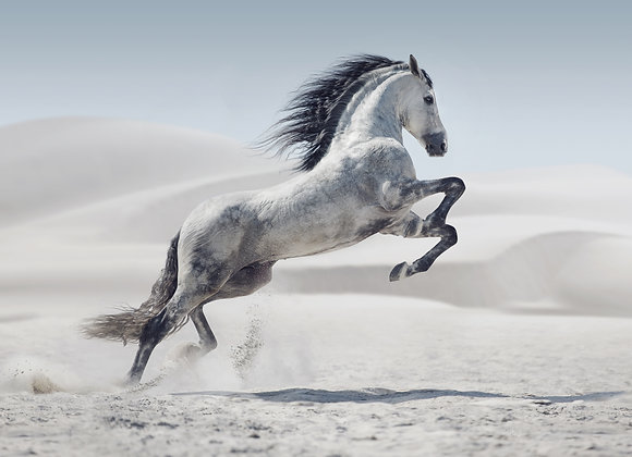 סוס לבן דוהר