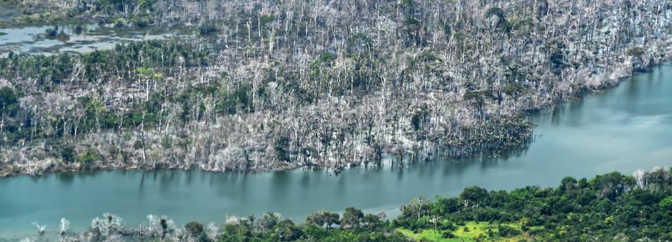 BRASIL-AMAZONÍA - EMILIO CHONG