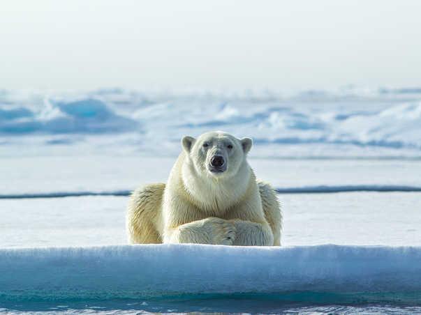 Arctic Emperor