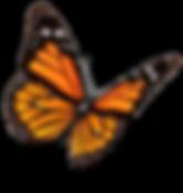 monarch-butterfly-clipart-transparent-ba