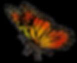 33158-6-flying-butterflies-transparent.p