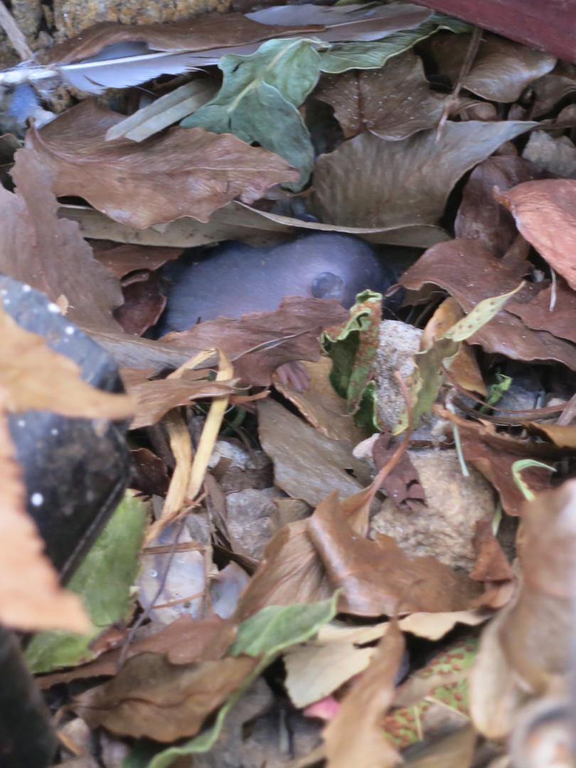 Rat Nest in Sprinkler Valves