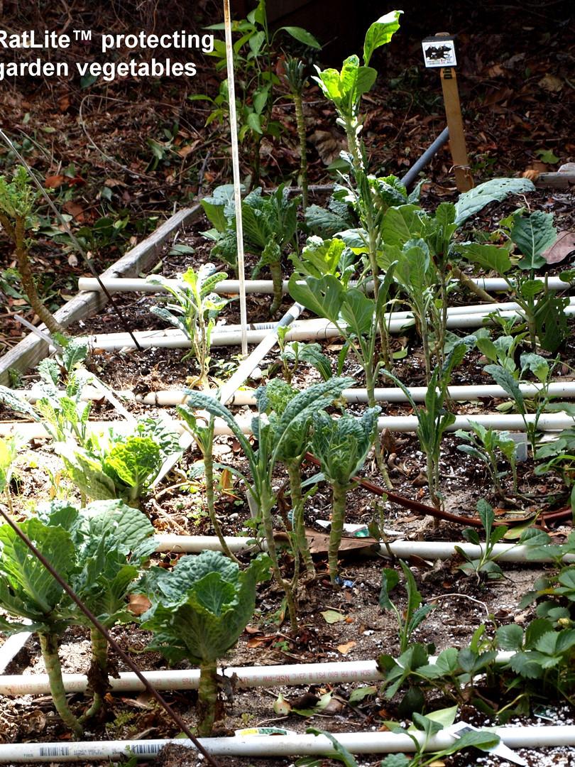 Vegetable Garden Application.jpg