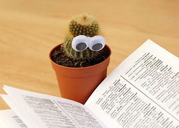book-cactus-knowledge-159840.jpg