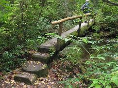 Boogerman-Trail-log-bridge-1-768x576 (1)