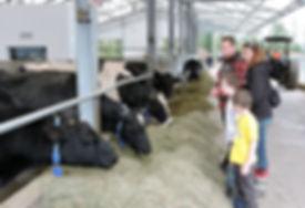 Little-Qualicum-Cheese-Farm_mini-1200x82