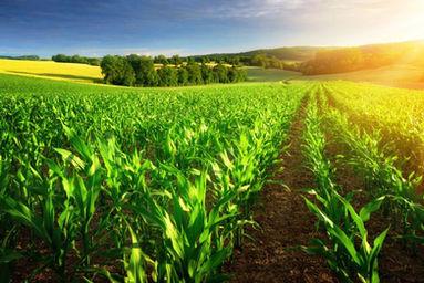 Cereali e Granaglie in Veneto, vendita, lavorazione, stoccaggio