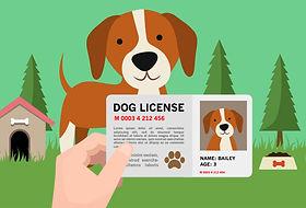 Dog License - Sterilized Dog