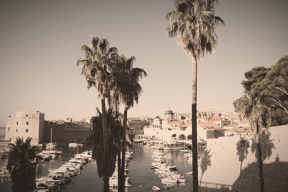 Dubrovnik Palm 1 _edited.jpg